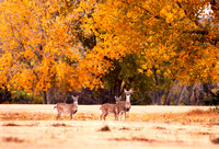 Three Deer, Wolf Creek, FA